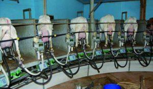 Lactocorder caprin utilisé lors du contrôle laitier