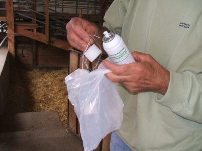 Pulvérisation de l'antibiotique (Orospray) sur les éponges